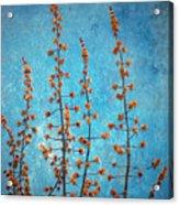 Blue Sky On A Sunday Acrylic Print