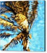 Blue Sky Palm Acrylic Print