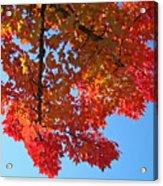 Blue Sky Red Autumn Leaves Sunlit Orange Baslee Troutman  Acrylic Print