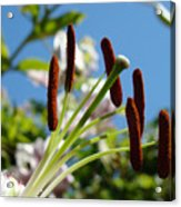 Blue Sky Sunny Floral Pink Lily Flower Baslee Troutman Acrylic Print