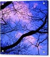 Blue Sky Through The Trees Acrylic Print