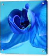 Blue Solitude Acrylic Print