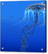 Blue Spotted Jellyfish Acrylic Print