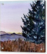 Blue Spruce Acrylic Print