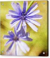 Blue Star #4 Acrylic Print