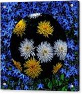 Blue Star Universe Acrylic Print