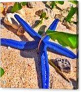 Blue Starfish Acrylic Print