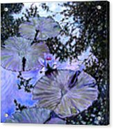 Blue Stillness Acrylic Print