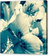 Blue Summer Flower Acrylic Print