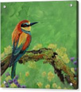 Blue Tailed Bee Eater Acrylic Print