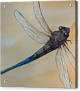 Blue Tale Acrylic Print