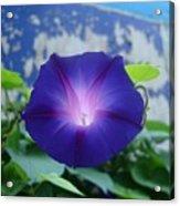 Blue Teefull Acrylic Print
