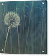 Blue Tinted Acrylic Print