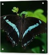 Blue Triangle Butterfly Acrylic Print