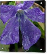 Blue Violet Raindrops Acrylic Print