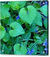 Blue Violets Acrylic Print