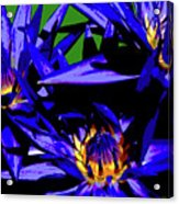 Blue Water Lily Iv Acrylic Print