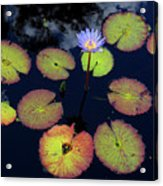 Blue Water Lily Acrylic Print