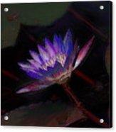 Blue Waterlily Acrylic Print