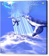 Blue Whales Acrylic Print