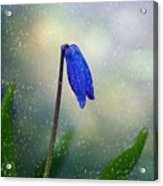 Blue Wild Flower Acrylic Print
