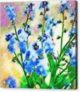 Blue Wildflowers Acrylic Print