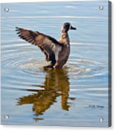Blue Winged Teal 3 Acrylic Print