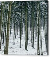Blue Winter Forest Acrylic Print