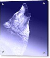 Blue Wolf    -007 Acrylic Print