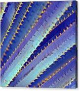 Blue Yucca Acrylic Print