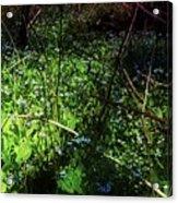 Bluebell 24 Acrylic Print