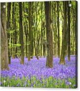 Bluebell Carpet Acrylic Print by Jane Rix