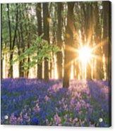 Bluebell Dawn Acrylic Print