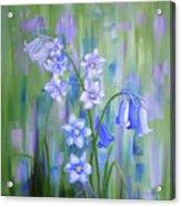 Bluebell Haze Acrylic Print