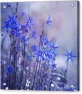 Bluebell Heaven Acrylic Print