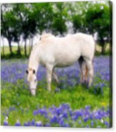 Bluebell Lunch Acrylic Print