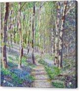 Bluebell Walk At Llanilar Aberystwyth Acrylic Print