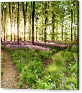 Bluebell Woods With Birds Flocking  Acrylic Print