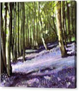 Bluebells At Grimescar Wood Acrylic Print