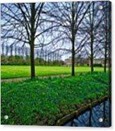 Bluebells In England Acrylic Print