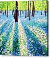Bluebells In The Woodlands Acrylic Print