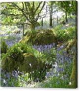 Bluebells On Dartmoor Acrylic Print