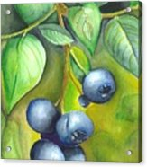 Blueberrries Acrylic Print by Angela Armano