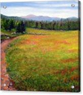 Blueberry Field 09 Acrylic Print