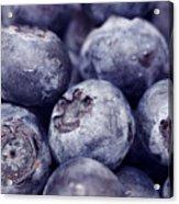 Blueberry Macro Acrylic Print by Kitty Ellis