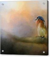 Bluebird In The Perfect Light Acrylic Print