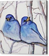 Bluebirds Acrylic Print