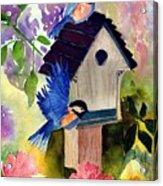 Bluebirds Nesting Acrylic Print