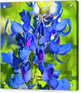 Bluebonnet Fantasy Acrylic Print