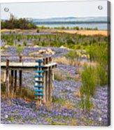 Bluebonnet Lakeshore Acrylic Print